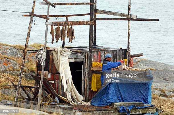 Fish drying outside a house in the Inuit village of Ilimanaq South of the Kangia Ice fiord Ilimanaq is a traditional Greenland settlement where the...