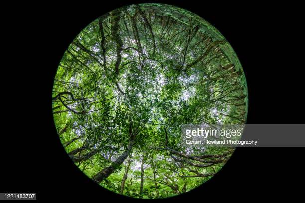 fish eye woodland - fish eye lens stock pictures, royalty-free photos & images