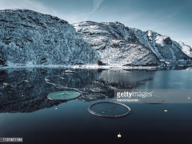 fish farm in norway - aquaculture stock pictures, royalty-free photos & images