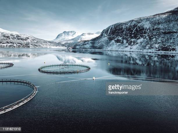 fish farm in norway - fishing industry stock pictures, royalty-free photos & images