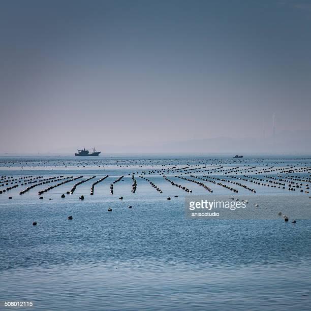 fish farm on marine