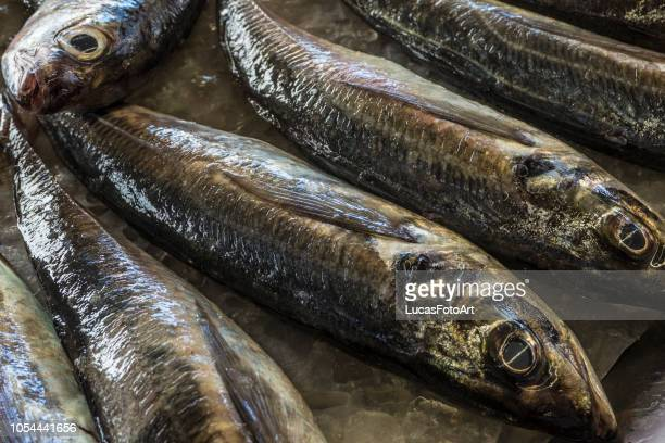fish fish mackerel in the market - trachurus stock pictures, royalty-free photos & images