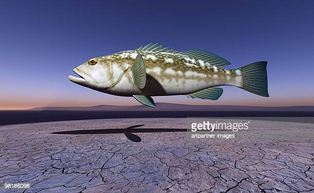 fish floating in the sky over a dry lake  - lake bed stock pictures, royalty-free photos & images