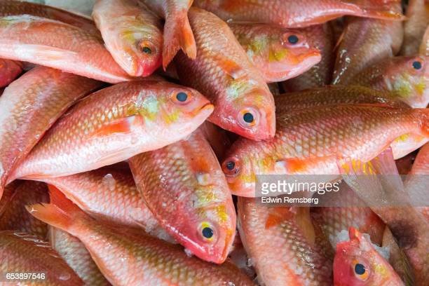 Fish for sale at the Muscat market