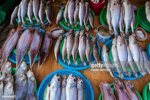 Fish for sale in fish market, Busan, South Korea