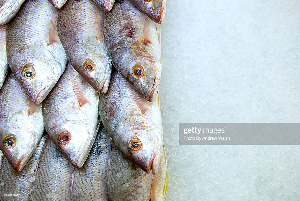 fish for sale : Stock Photo