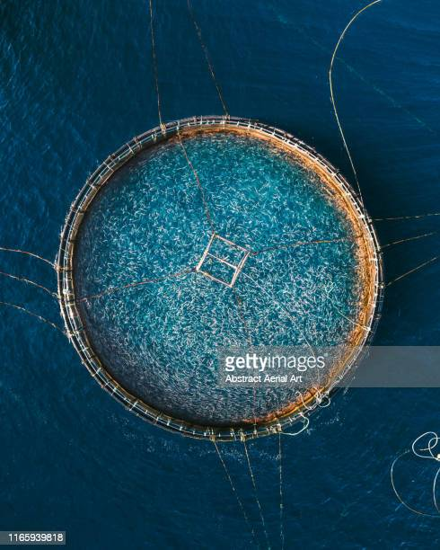 fish framing at sea as seen from drone point of view, lanzarote - unusual angle stock pictures, royalty-free photos & images