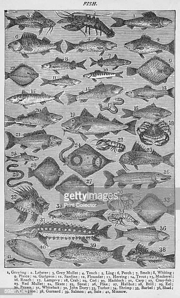 Fish From Mrs Beetons Everyday Cookery [Ward Lock Co London and New York 1907] Artist Unknown