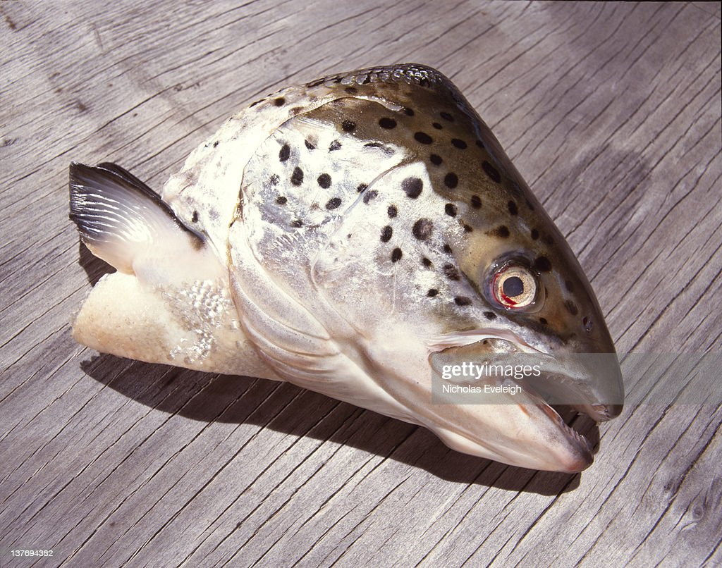 A fish head on a wooden plank : Stock Photo