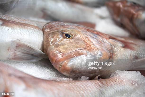 Fish heads on sale in Sydney, Australia.