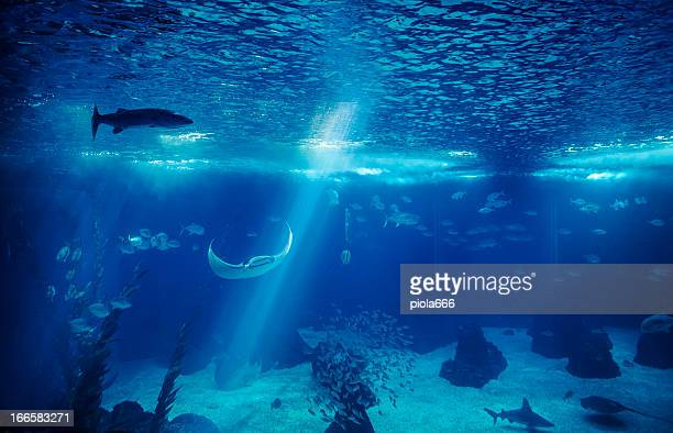 fish in a big blue aquarium - big fish stock pictures, royalty-free photos & images