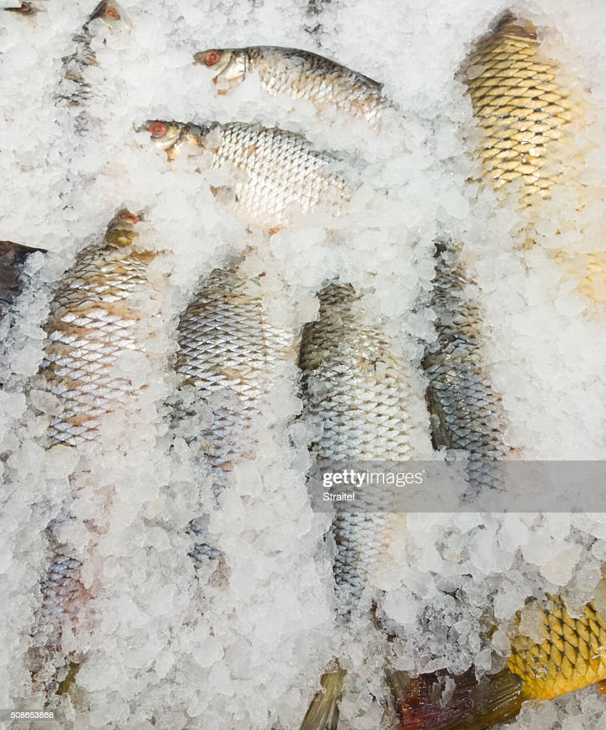 Fish in a supermarket. : Stock Photo