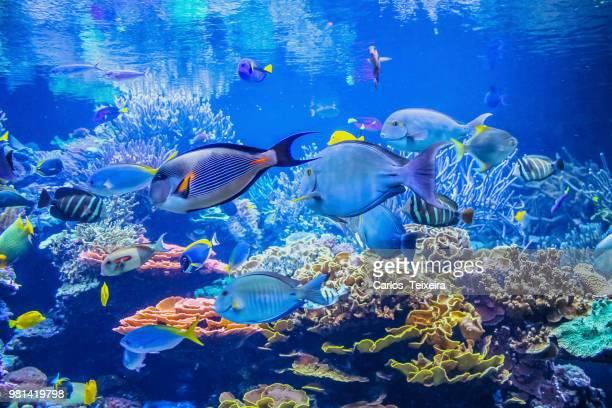 fish in aquarium - aquarium stock pictures, royalty-free photos & images