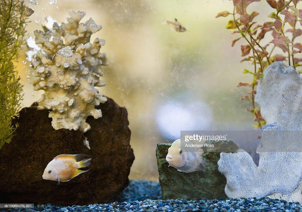 Fish in aquarium : Foto stock