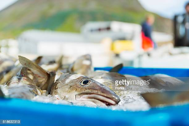Fish in container