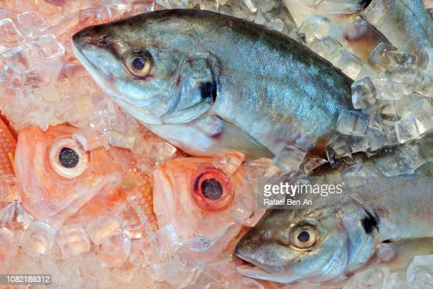Fish in ice in Seafood Market