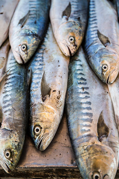 Fish in market, Taghazout, Morocco