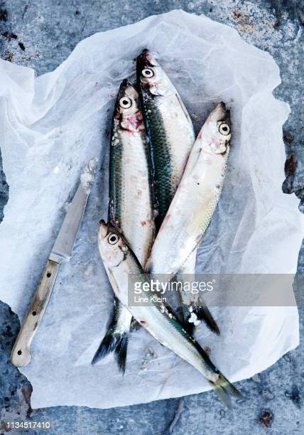 fish in paper wrapping with knife - klein stock pictures, royalty-free photos & images