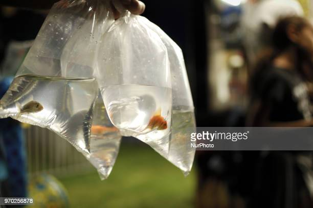 Fish in plastic bags won at a game booth are held by a funfair attendee at a small community carnaval in Wyndmoor PA just outside Philadelphia on...