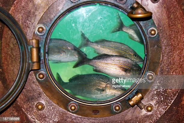 Fish in porthole