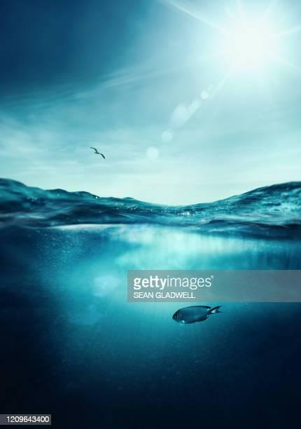 fish in sea - wasseroberfläche stock-fotos und bilder