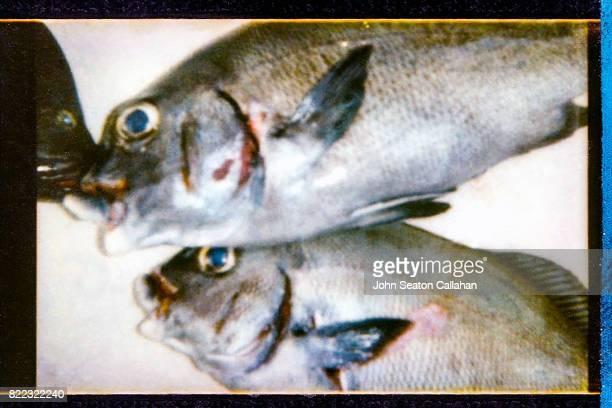 Fish in the Mentawai Islands