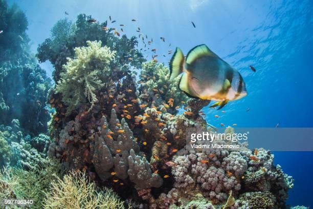 Vis in onderwater ambient
