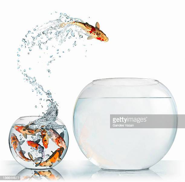 Fish leaping into larger empty bowl