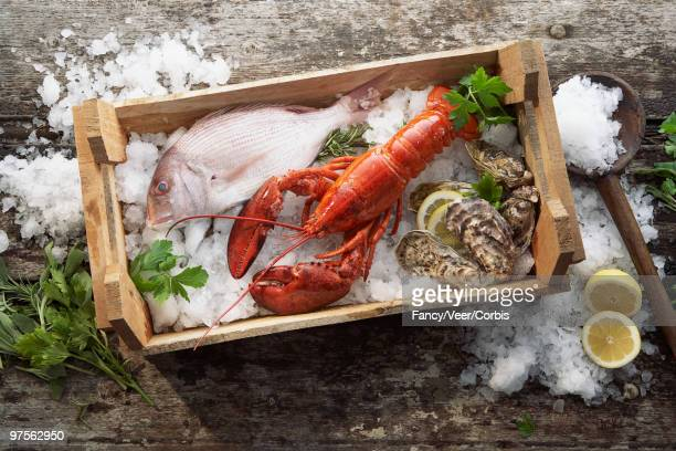 Fish, lobster and oysters