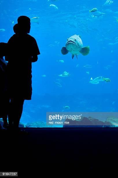 Fisch-Blick von Mann und Kind