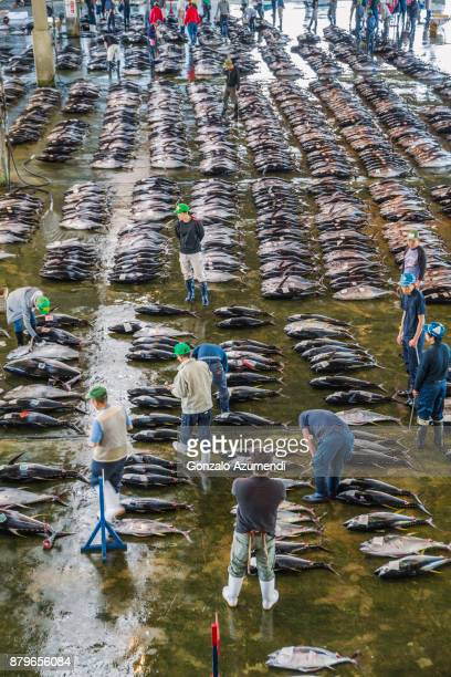 Fish market at Katsuura in Japan