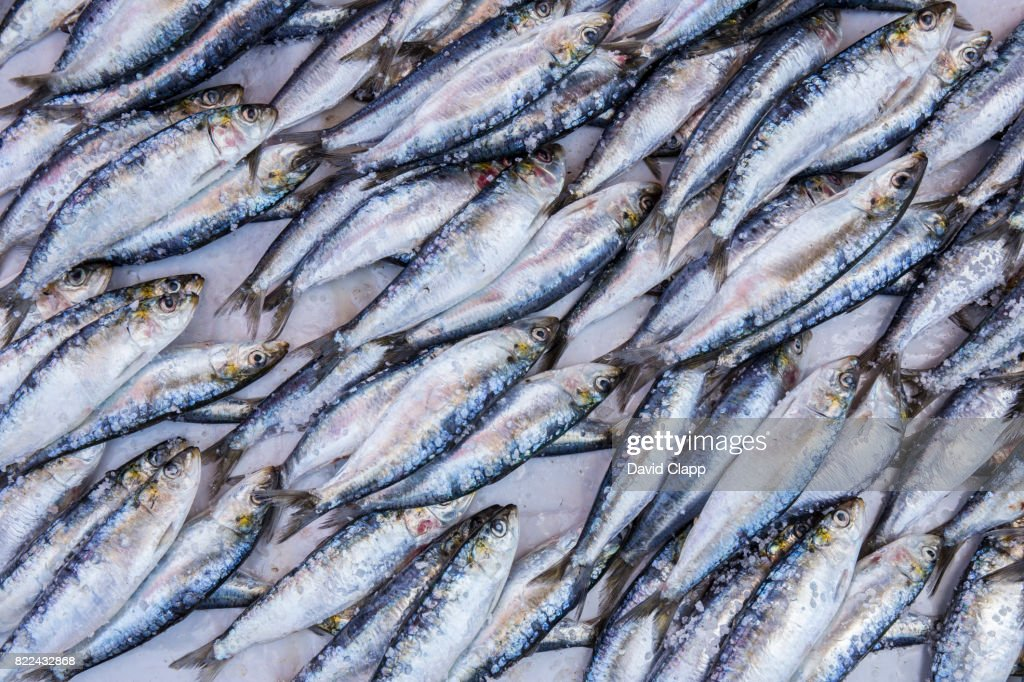 Fish market, Essaouira, Morocco : Stock Photo