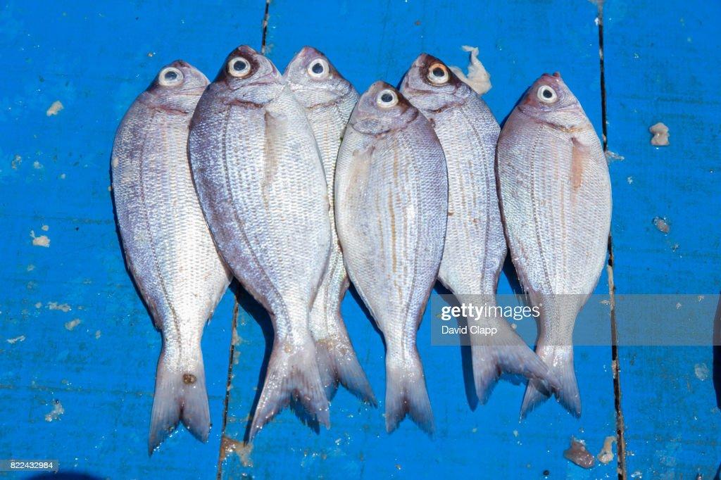 Fish market, Essaouira, Morocco : Stock Photo