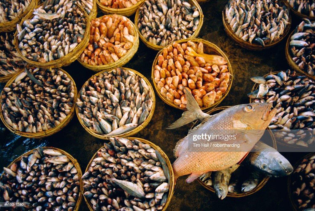 Fish market, Hue, Vietnam : Foto de stock