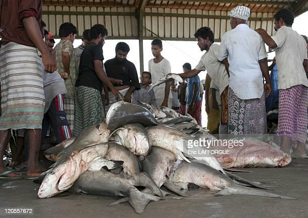 Fish market in Al Hudaydah Yemen on May 18 2005