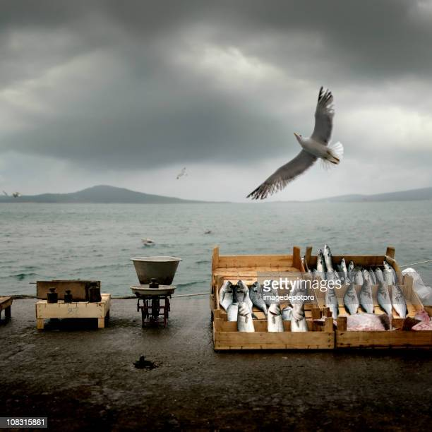 fish market - turkey hunting stock photos and pictures