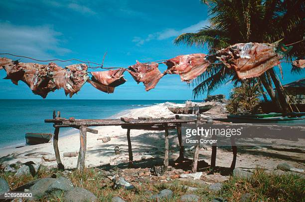 Fish Meat Drying on Line in the Sun