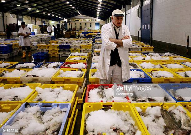 A fish merchant looks over the fresh fish prior to auction at Grimsby fish market in Grimsby Lincolnshire UK on Thursday May 22 2008 The market...