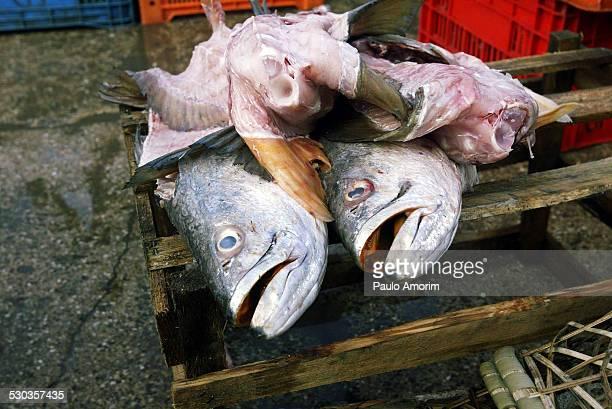 Fish on display at Ver-o-Peso market in Belem