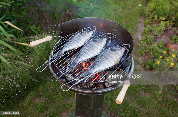 Fish on open flame grill