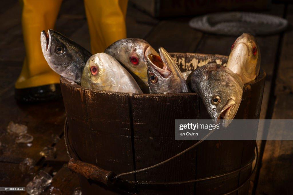 Fish on Pier : Stock Photo