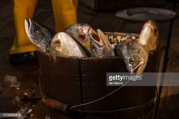 fish on pier - ian gwinn stock pictures, royalty-free photos & images