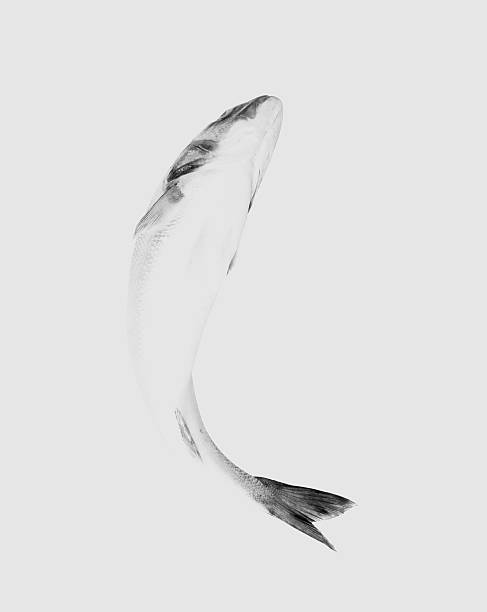 Fish on white background, close-up