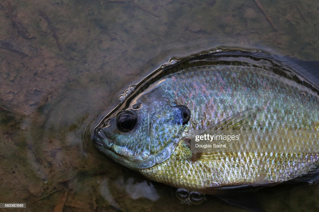 Fish out of water : Stock Photo