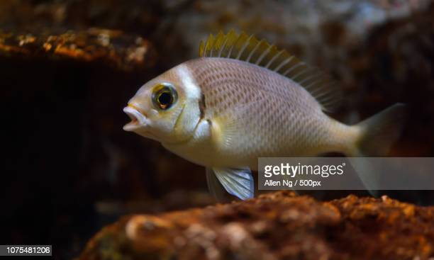 fish - squirrel fish stock photos and pictures