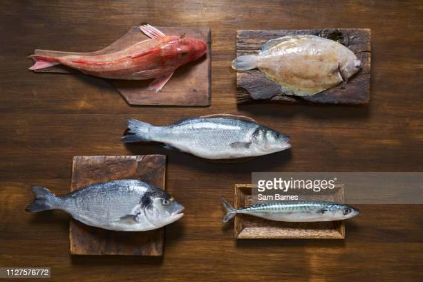 fish - pescado y mariscos fotografías e imágenes de stock