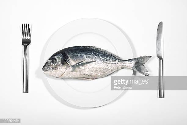 fish - fish stock pictures, royalty-free photos & images