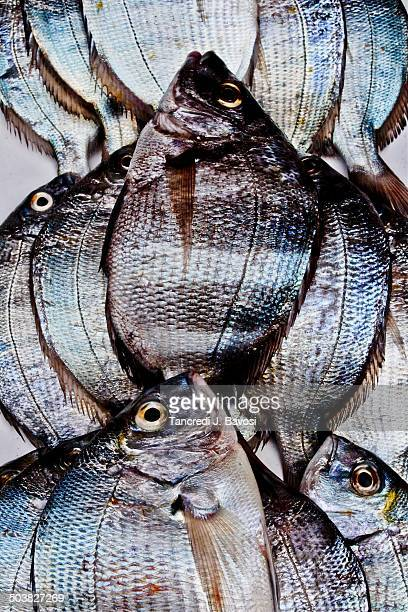 fish - bavosi stock pictures, royalty-free photos & images