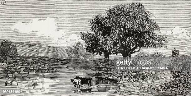 Fish Pond Burnham Beeches United Kingdom illustration from The Graphic volume XXVIII no 723 October 6 1883