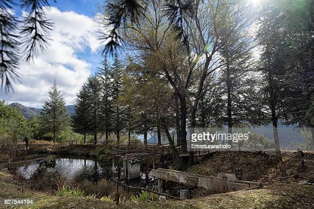 fish pont in trout farm under cypress trees. - emreturanphoto stock pictures, royalty-free photos & images